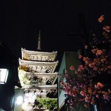 夜の五重の塔と桜がとっても綺麗