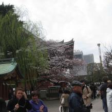 境内には桜とたくさんの観光客