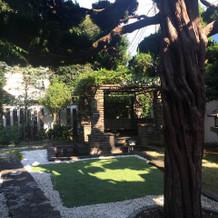 庭に藤棚と池がありました。