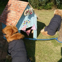 愛犬。。たくましい背中。手作りハウス