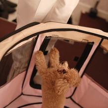 控室に犬待機