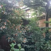 町屋ならではのお庭