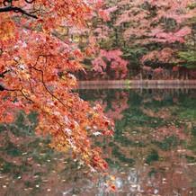 雲場池のピークの紅葉。