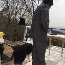 新郎と並んで歩く愛犬