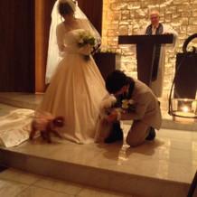 愛犬2匹に指輪を運んできてもらいました。