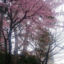 2月は河津桜が咲いていました。