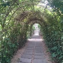 ガーデン挙式会場までのトンネル