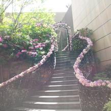 ガーデンへ続く階段。このお花は常設だそう