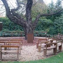 ガーデン挙式会場は木の椅子