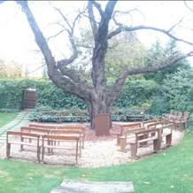 ガーデン挙式会場の桜の木