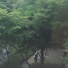 新婦さんが庭園で写真撮影をしていました。