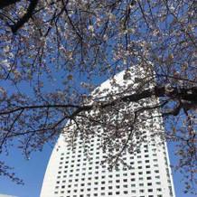 桜がきれいに咲いていました