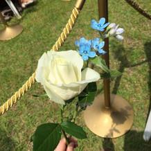 ダーズンローズのお花。青い花はリクエスト
