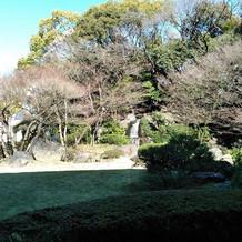 緑豊かな中庭です。