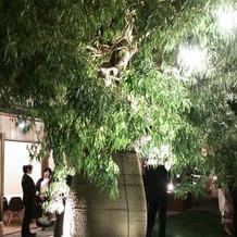 夜照らされた木