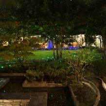 夜の庭です。