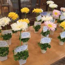 お出迎えのお花たち可愛い