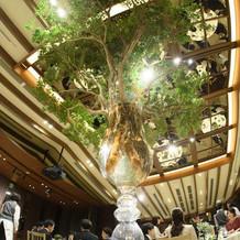 会場真ん中に大きな木を飾りました