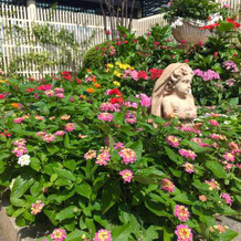 お庭もお花いっぱいでかわいかったです!