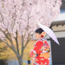 和装 ロケーション 色打掛 桜 庭園