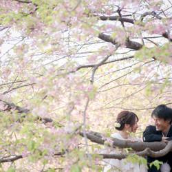 白無垢 黒紋付袴 桜