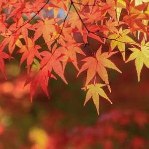 一番人気の秋ウエディングプラン!
