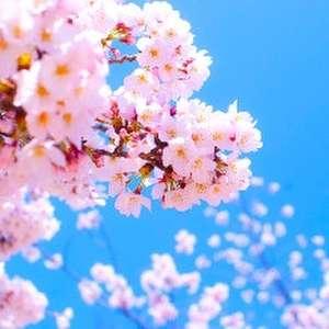 【2018年3~5月限定!】スプリングウェディングプラン