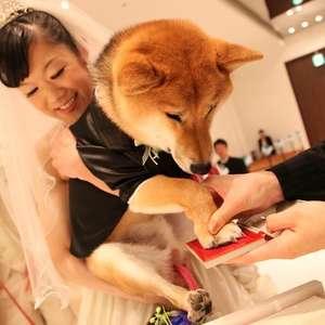 【ペットと一緒に】挙式6万7000円