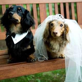 【愛犬と泊まれるお部屋付き】ペットと一緒のウエディングプラン