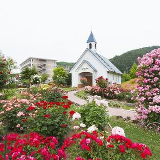 薔薇満開の中の教会