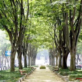 洗練された都会の街並みと、樹齢百年のケヤキ並木が美しく融合したメインストリートから、おふたりだけの世界へ。