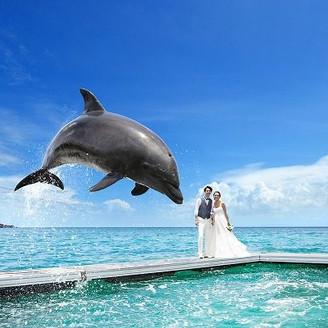 沖縄で唯一!ドルフィンセレモニーはお子様連れの挙式でも大人気!