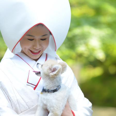 和装 白無垢 綿帽子 ロケーション 神社 ペットと一緒