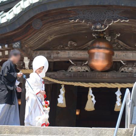 和装 白無垢 紋付袴 綿帽子 ロケーション 神社 ペットと一緒