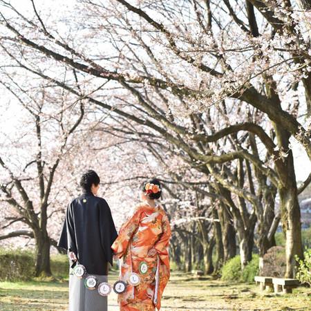 桜 ロケーション 色打掛