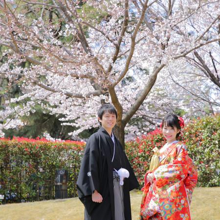 和装 色打掛 ロケーション 桜 庭園