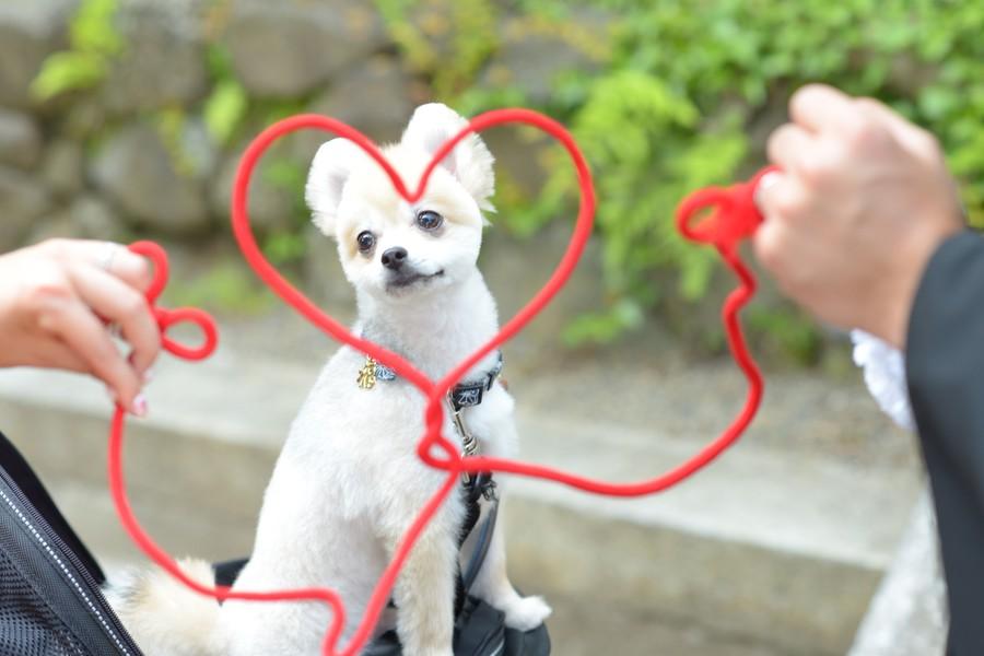 和装 ロケーション 神社 ペットと一緒 赤い糸